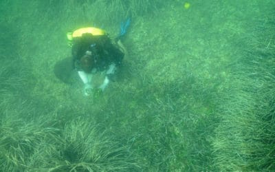 Le projet REPIC, début d'une politique de restauration des herbiers sous-marins à posidonie en France ?