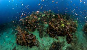 Biodiversité marine en Méditerranée