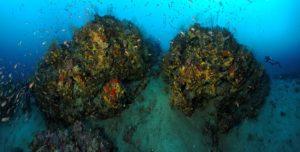 Récifs coralligènes en forme de massifs au large de Fréjus (France)- © Laurent Ballesta