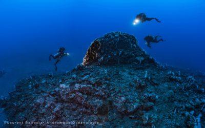 A la découverte du Mont sous-marin Lapérouse