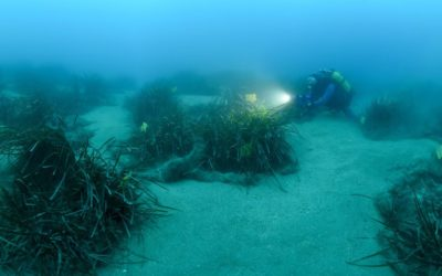 Monaco : Andromède au chevet de l'écosystème marin