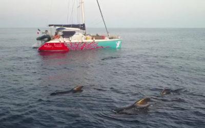 Tirer avantage du confinement pour inventorier une biodiversité marine non dérangée