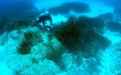 La Corse dévoile sa biodiversité et ses paysages sous-marins lors d'une campagne scientifique de deux mois