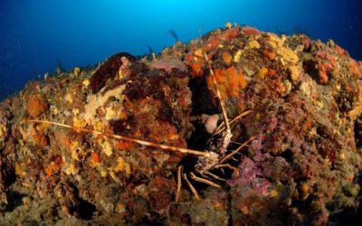 Diagnostic écologique du cantonnement de pêche de Saint-Florent