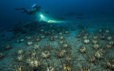 Planète Méditerranée (Deep Med) bientôt sur la plateforme en ligne chinoise Bilibili