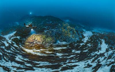 Clonalité chez les laminaires de Méditerranée