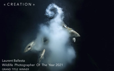Laurent Ballesta a remporté le Grand Title Award du Wildlife Photographer Of The Year 2021