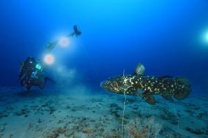 Coelacanthe et la caméra girafe