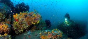 Coralligène de Méditerranée, Tavolara, Sardaigne ©Andromède océanologie