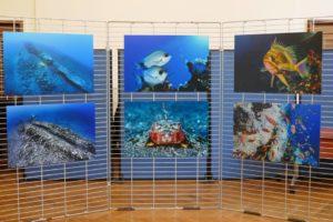 expo outre mer