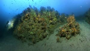 journee mer