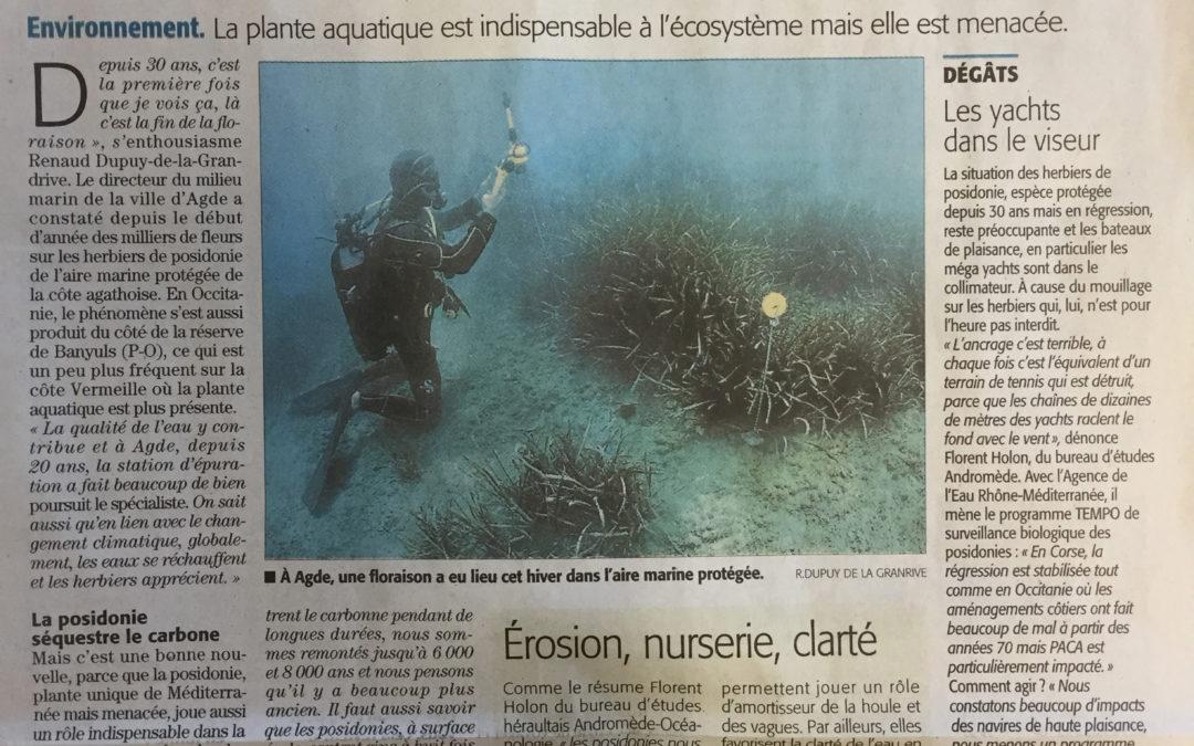 L'herbier de posidonie d'Occitanie dans le Midi Libre